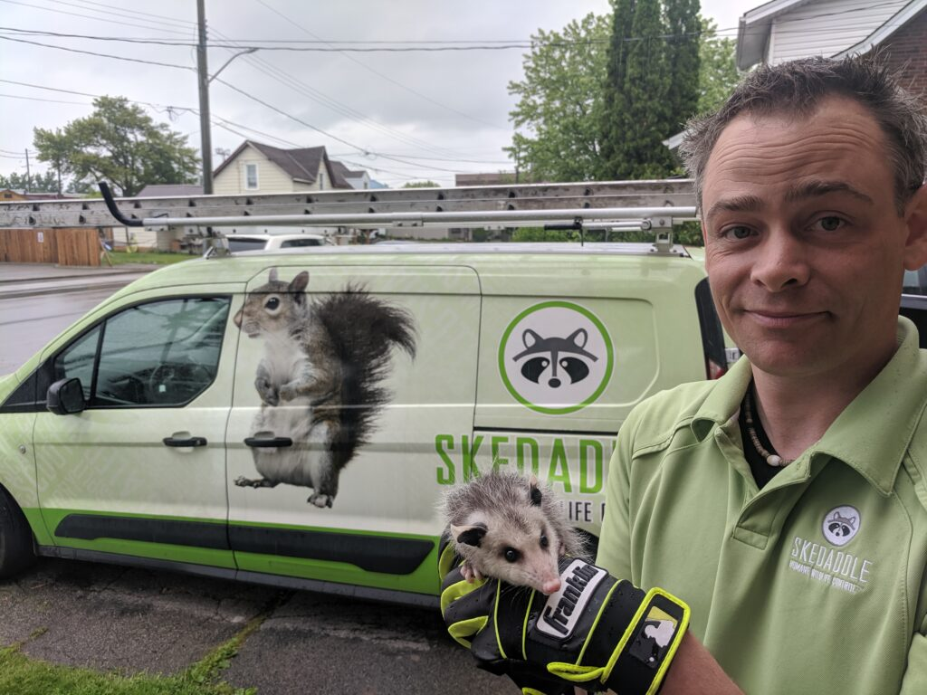 Technician with Opossum in hand